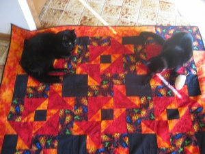 Kittehs on Quilt